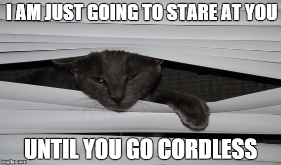 CatCordless 10 window covering safety memes for pet and child protection